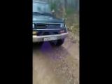 В Приморском крае застрелили сборщика кедровых шишек