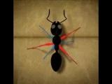 Как ходят муравьи
