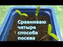 Часть 1. Сравниваю посев томатов: сухими и замоченными в талой воде, посев в кипяток и АКЧ