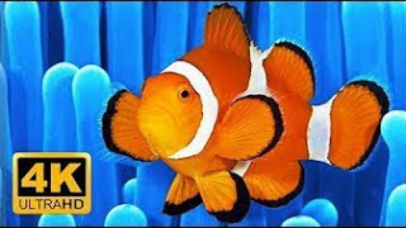 💦RelaxWeLove💦Soothing Clown Fish Nemo Aquarium Relaxing Music 💦 Sleep Meditation 💦 Screensaver