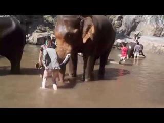 Разгневанный Слон откинул туристку