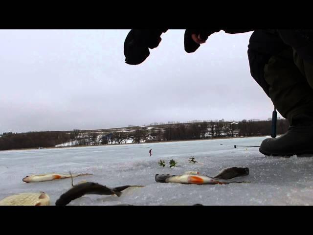 Зимняя рыбалка 2015. Самойловка Белгородская область 28.02.2015