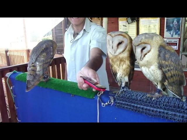 Gentle owls