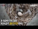 Природные инкубаторы Кыргызстана