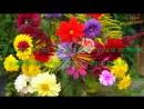 С Днем Рождения в ноябре Красивая музыкальная видео открытка Музыкальное видео поздравление