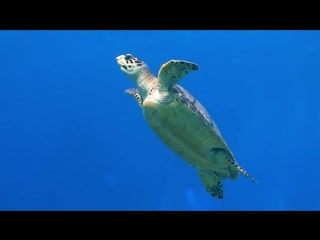 Piano Instrumental Music - Dolphins And Sea Turtles