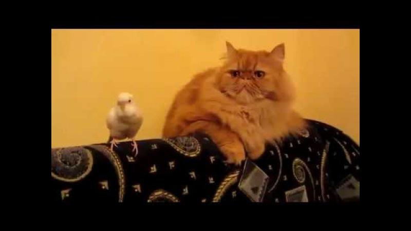 Невероятно смешной прикол с котом и попугаем Разборняк питомцев Смотрим Сме