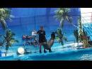 СМОТРИ: Дельфин рисует картину!/Ч. море 1 ч./Дельфинарий видео | SEE!: Black Sea Dolphinarium
