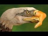 Eagles  Heartache Tonight -HD