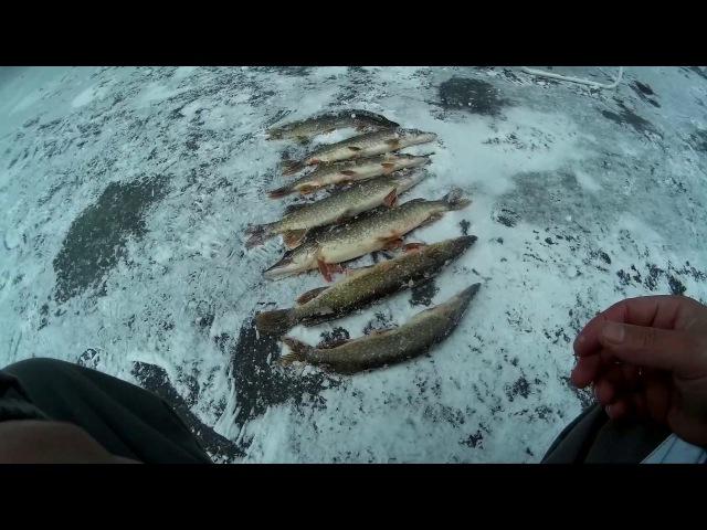 Жэрлицы Что будет если взят жену на рыбалку