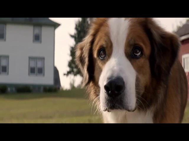 Собачья жизнь 2017 Трейлер к фильму