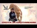Африка 2011. Охота за охотниками. ФотоСафари в Кении. Сибиряки фотографируют. Филь ...