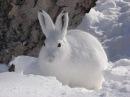 Как зимой содержу кроликов