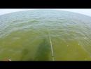 Азовское море, Ейский лиман.тарань 2