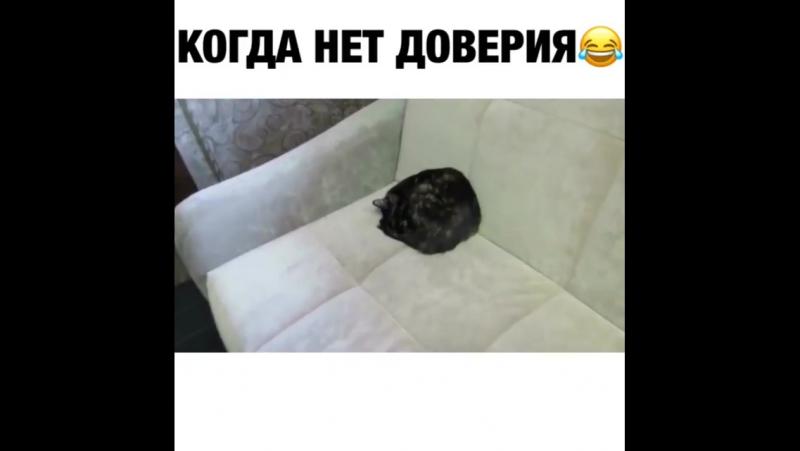 Как спит мой кот 🤣 ptencoff