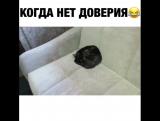 Как спит мой кот 🤣#ptencoff