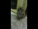 играем с кошкой!🐈🐈🐈🐈