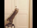 Учу кота открывать двери