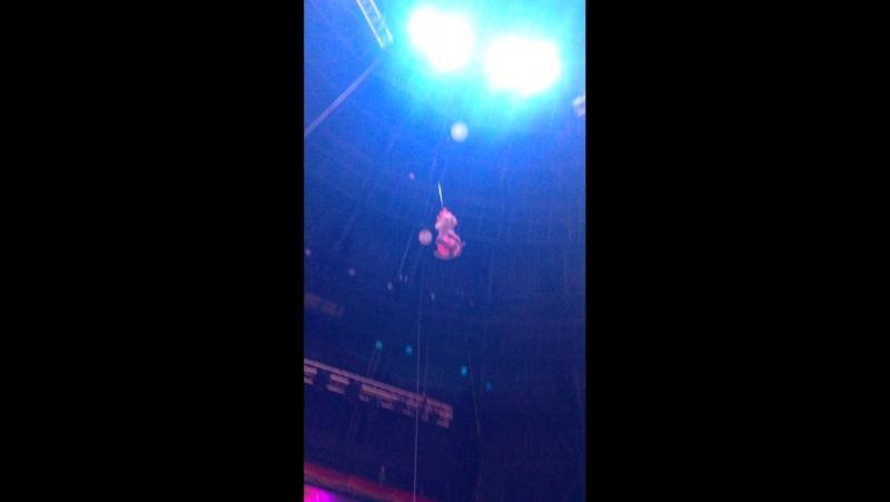 Под купол цирка СПб