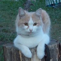 Еремин Юрий
