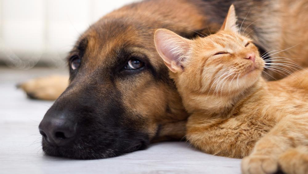 В Карачаево-Черкесии появится первый приют для бездомных животных