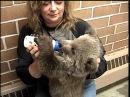 Bottle Feeding GRIZZLY BEAR CUB