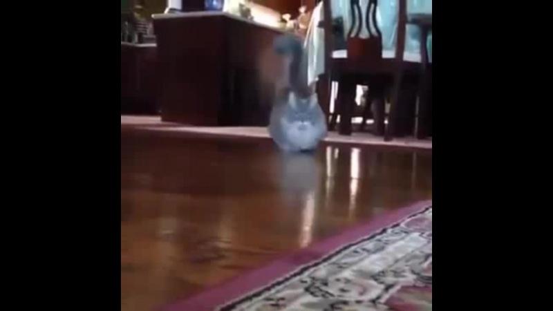 Lowrider cat · coub коуб