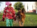 Собака и ребенок Как правильно построить отношения
