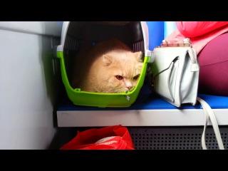 Депрессивный кот. Depressive cat. (07.06.2017)