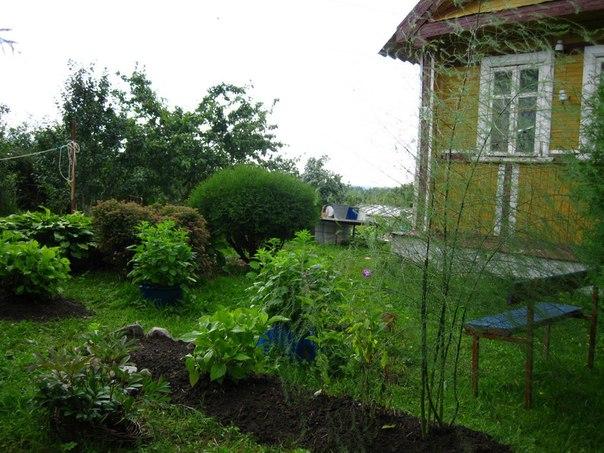 Фото №456239233 со страницы Ольги Васильевой