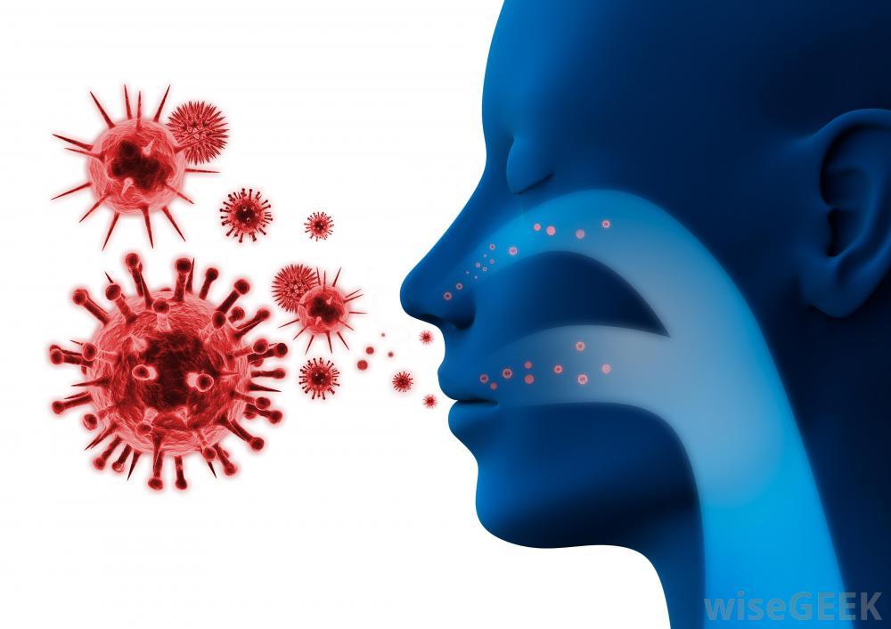 Антитела иммунной системы