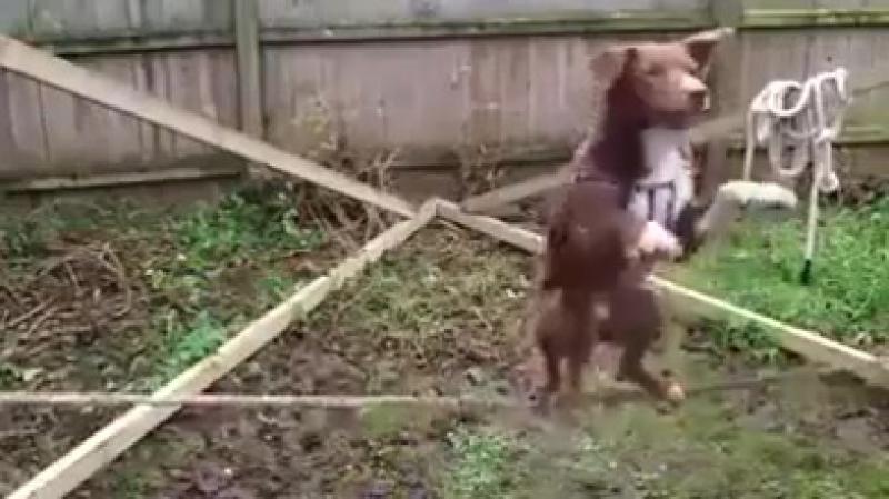 Когда ничего не получается и всё плохо посмотри на этого пса