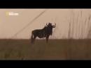 Необычное Поведение Животных — Звериные Причуды Документальные фильмы HD