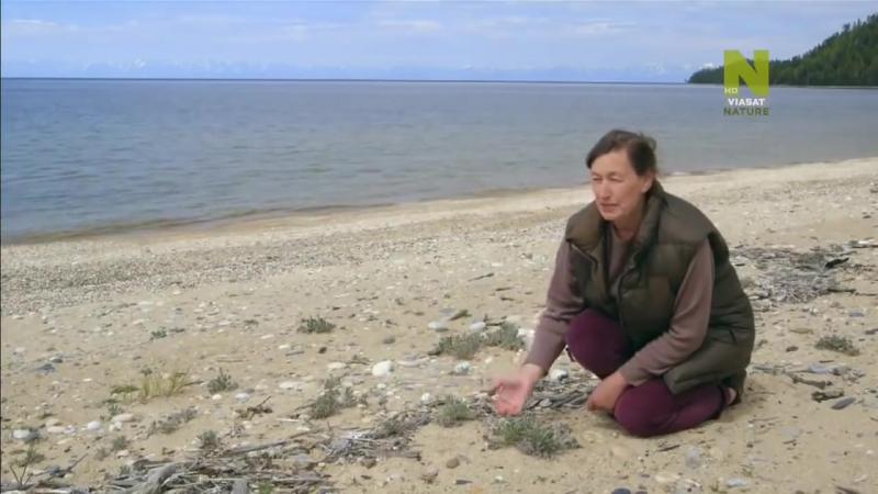 Документальный фильм. Тайны мировых озер. Сибирь. Озеро Байкал