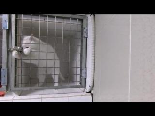 Побег котейки из клетки