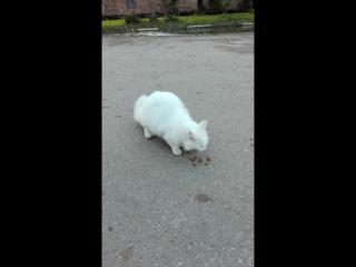 компанейский кот))