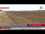 Крымские аграрии собрали наибольший урожай зерна за последние 8 лет