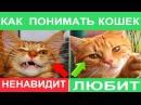 ЯЗЫК КОТОВ Что хочет кошка и о чем думает Как понять кота Биософия кошек