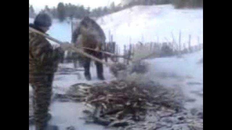 Оооочень крупный зимний улов
