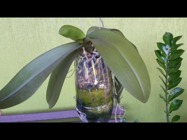 (127) Phalaenopsis no PET com reservatório