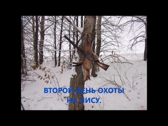 Охота с гончими на лису