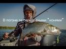 Отличное видео В поисках жереха Рыбинка и Волга