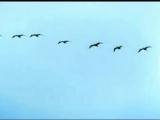 Семнадцать мгновений весны 1973 - Музыкальные темы фильма и Вячеслав Тихонов.