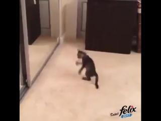 танец  Кукарелла !