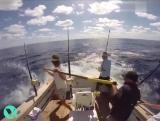 Ловись рыбка большая и очень большая