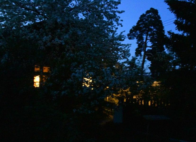 Ночное цветение