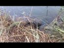 черепаха болото тортилла tortoise