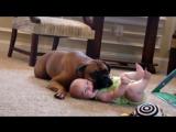 собаки и дети - подборка для хорошего настроения