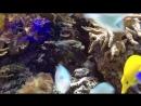 Океан Риф необычный подводный мир. Релакс