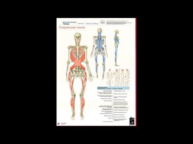 Анатомические поезда Т.Маерса - Спиральная линия